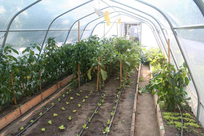namakalni (zalivalni) sistemi v rastlinjakih