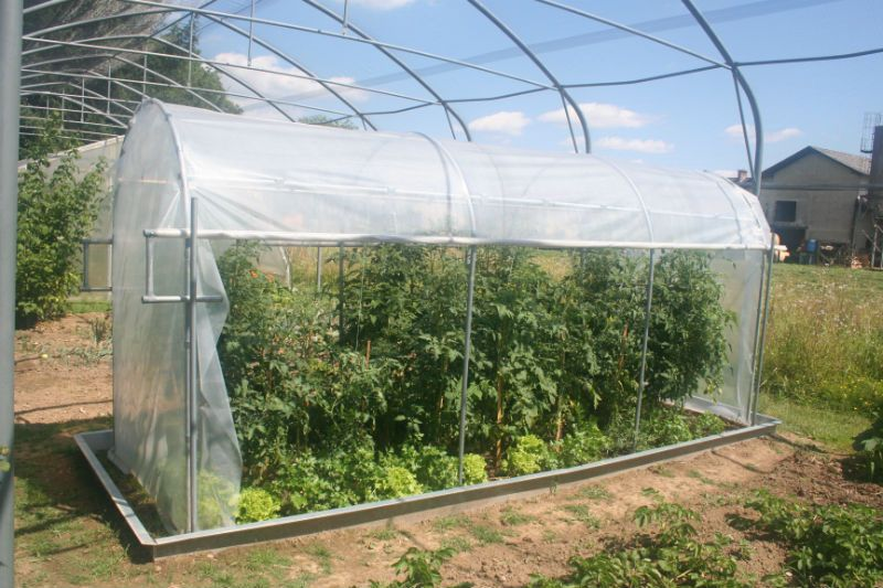 pridelava zelenjave iz vrtnega rastlinjaka