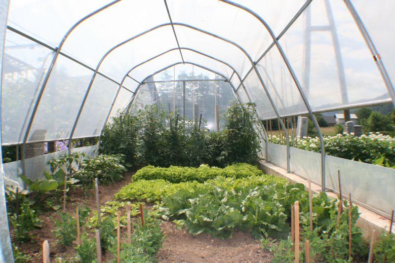 pridelava zelenjave v steklenjakih