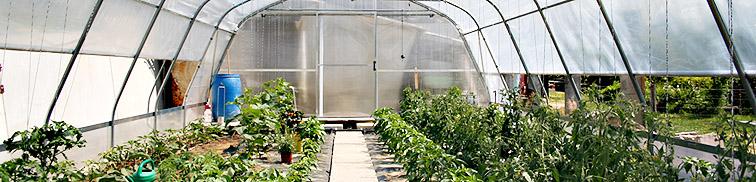 zalivanje vrta s PVC cevmi za namakanje rastlinjakov